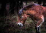 Bay Horse in Bare Forest