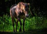 Chiaroscuro Portrait of a Horse