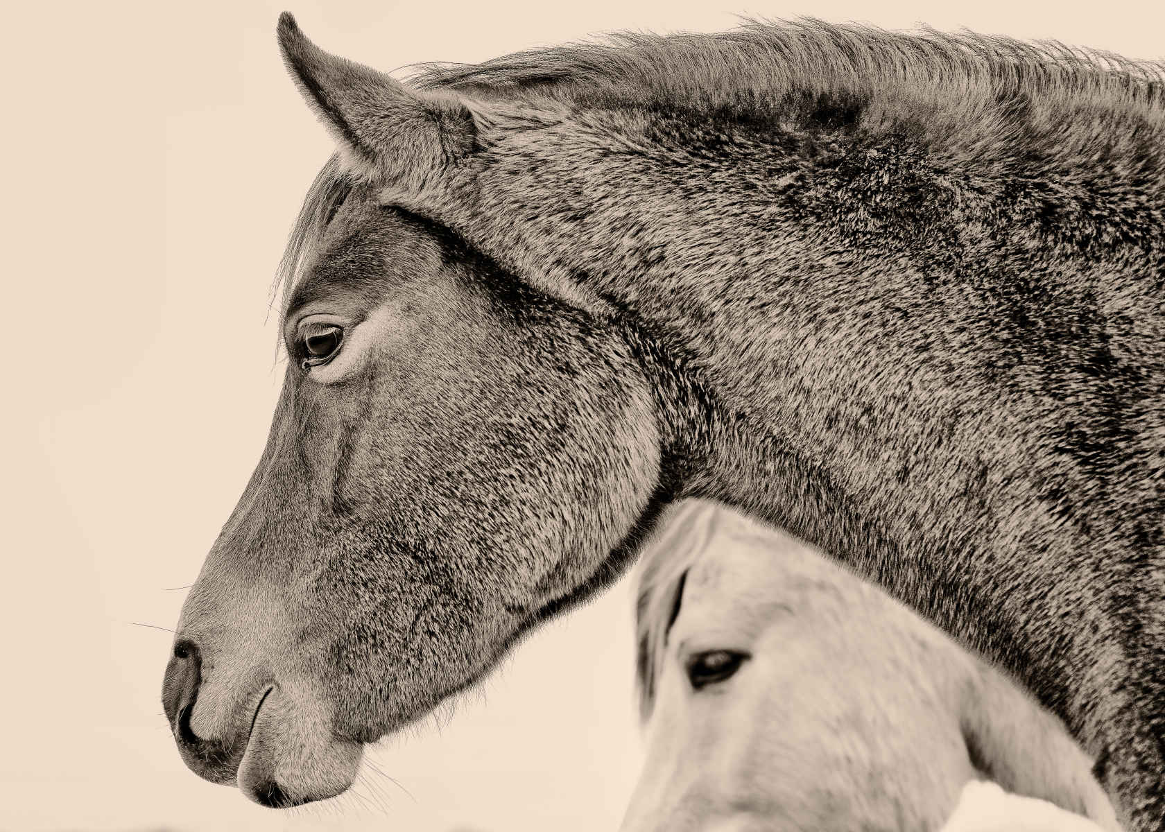 dark and light horse portrait