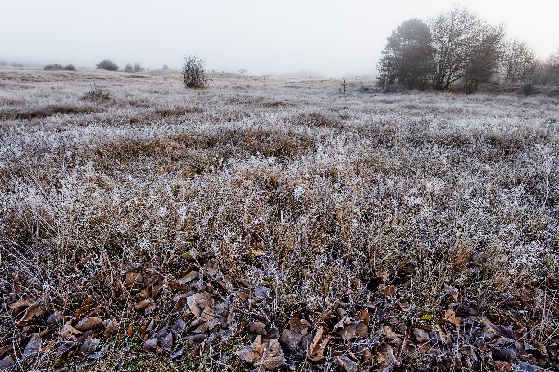 Dead Leaves In A Frosty Field