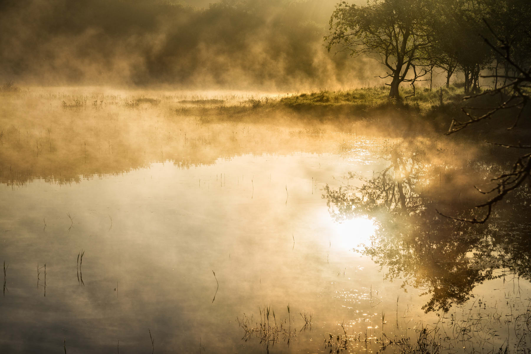 dreamy pond in lingering morning mist