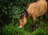 Dun Horse amid Lush Greenery