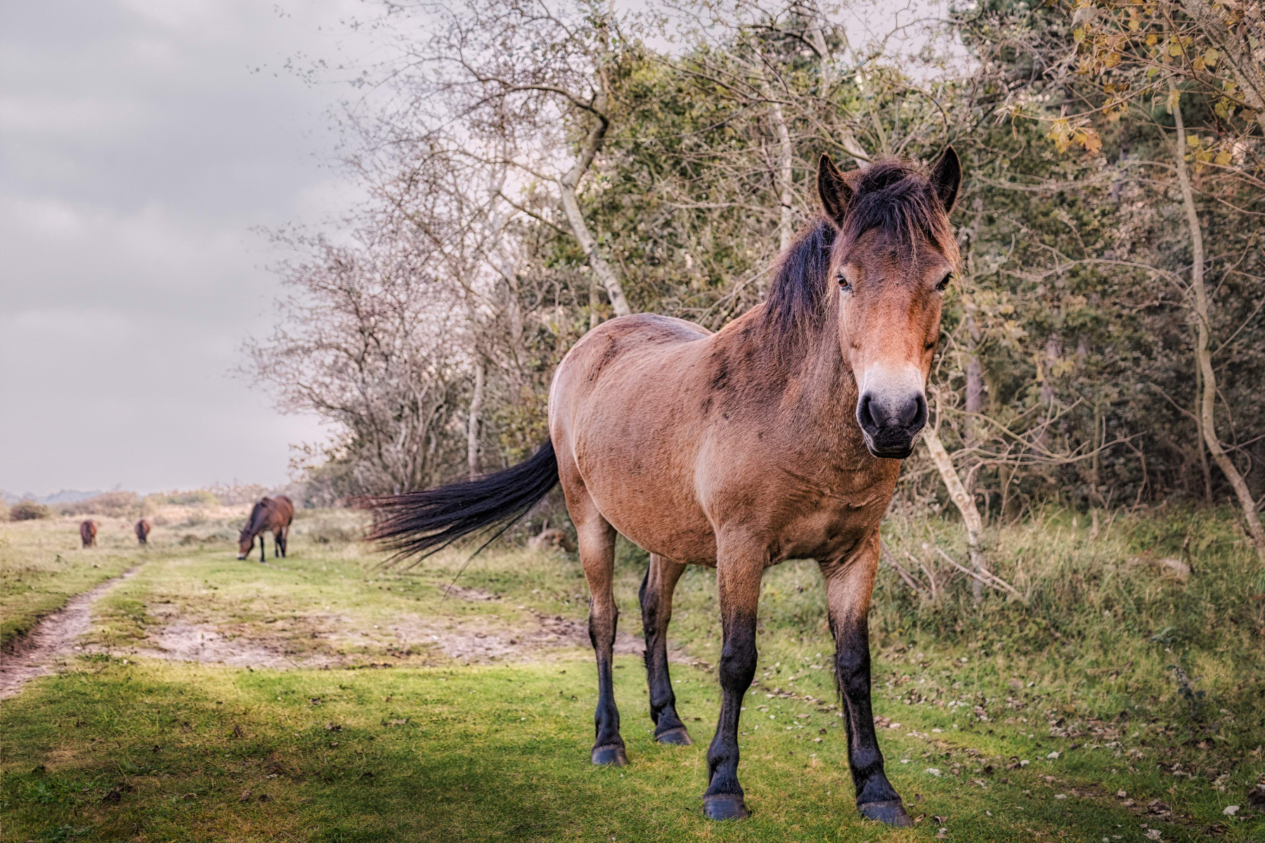 Encounter with Pony on a Path