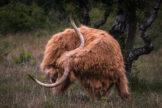 Flexible Bull