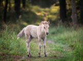 Foal on Forest Path