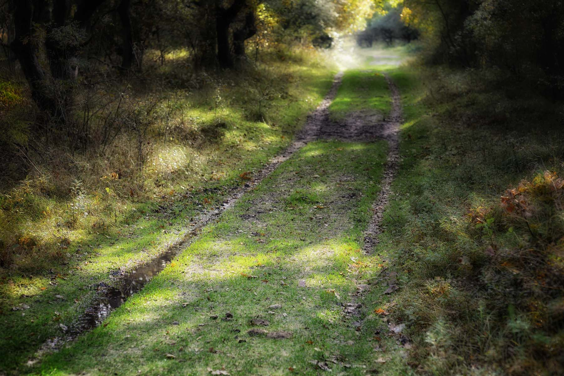 forest path in dappled light
