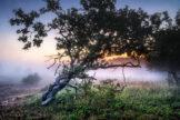 Glowing Mist at Daybreak