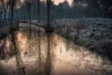 Golden Glow in Icy Forest Ditch