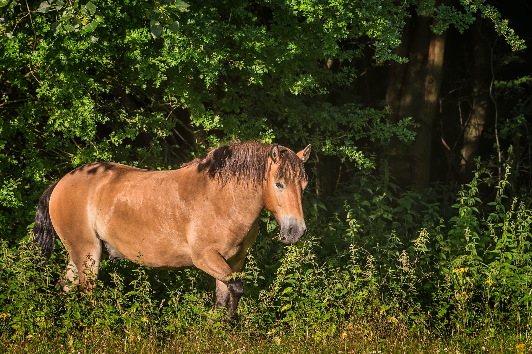 Horse Emerging from Forest