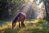 Horse Grazing in a Flood of Sunbeams