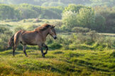 Horse Running Through a Field in Morning Light