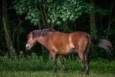 Horse Under Sycamore Tree