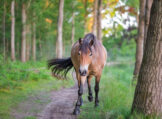 Horse Walking down Forest Path While Sun Is Hitting Tree Tops