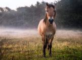 Horse in Lingering Morning Fog
