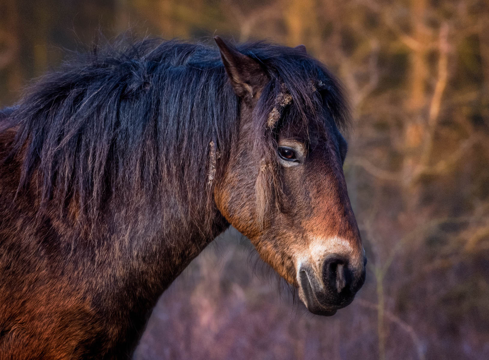 Horse with Decorated Side Whiskers