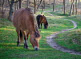 Horses Grazing Along a Winding Path