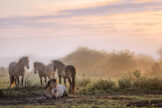 Horses in Lifting Fog at Sunrise