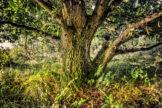 Intimate Oak