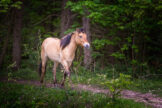 Light Horse in Dark Forest