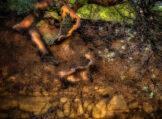 Manzanita Roots Exposed