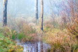 Marshy Woodland in Winter Mist