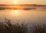 Morning Mists of Summer