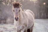 Pale Horse on a Cold Winter Morning