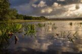 Pond Glistening in Sunburst