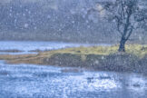 Pond in Heavy Downpour
