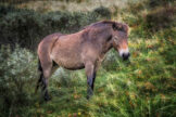 Pony on a Dune Slope