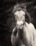 Running Horse Portrait