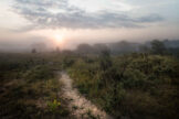 Sandy Path in Morning Mist