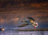 Smooth Landing in Morning Glow