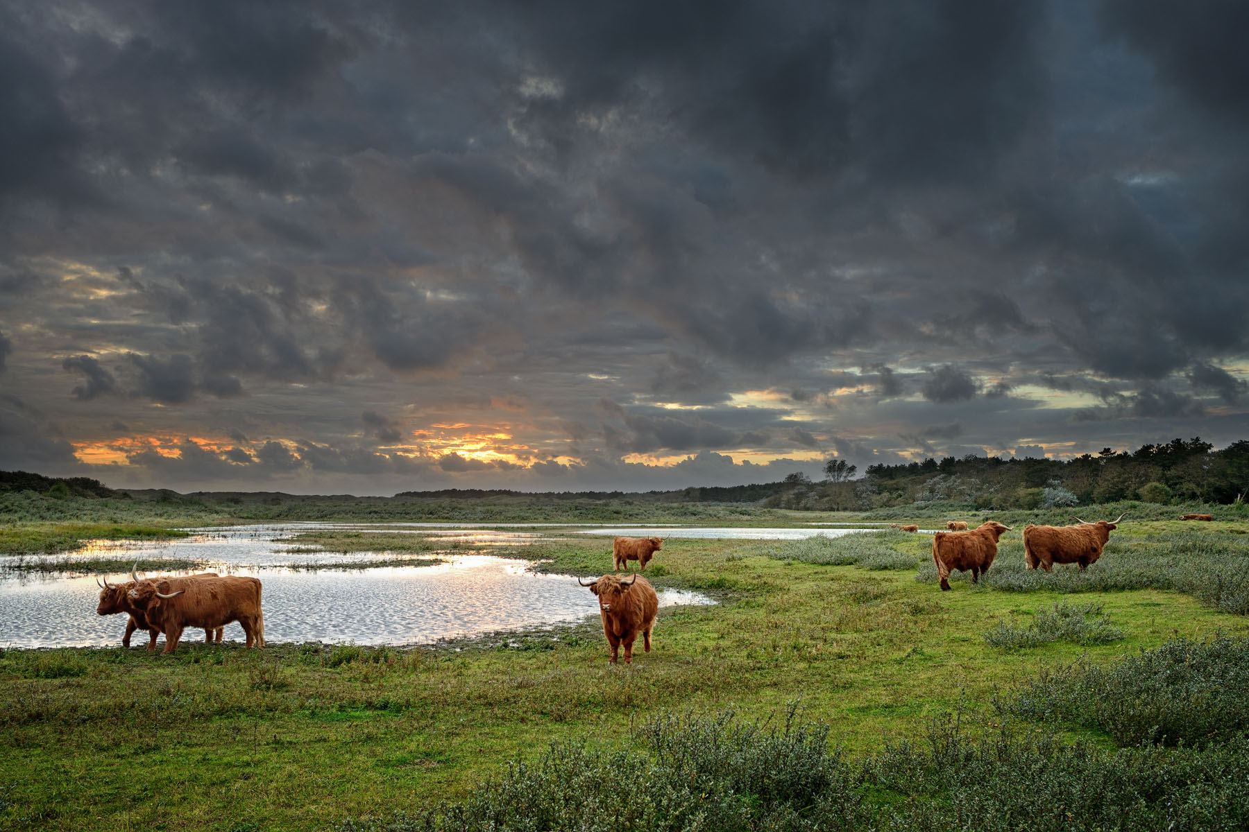sunset with rain clouds and cattle