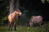 Tail Swishing Horse