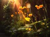 The Last Rays of Magic Evening Light