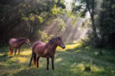 Two Horses Standing in Rays of Sunlight