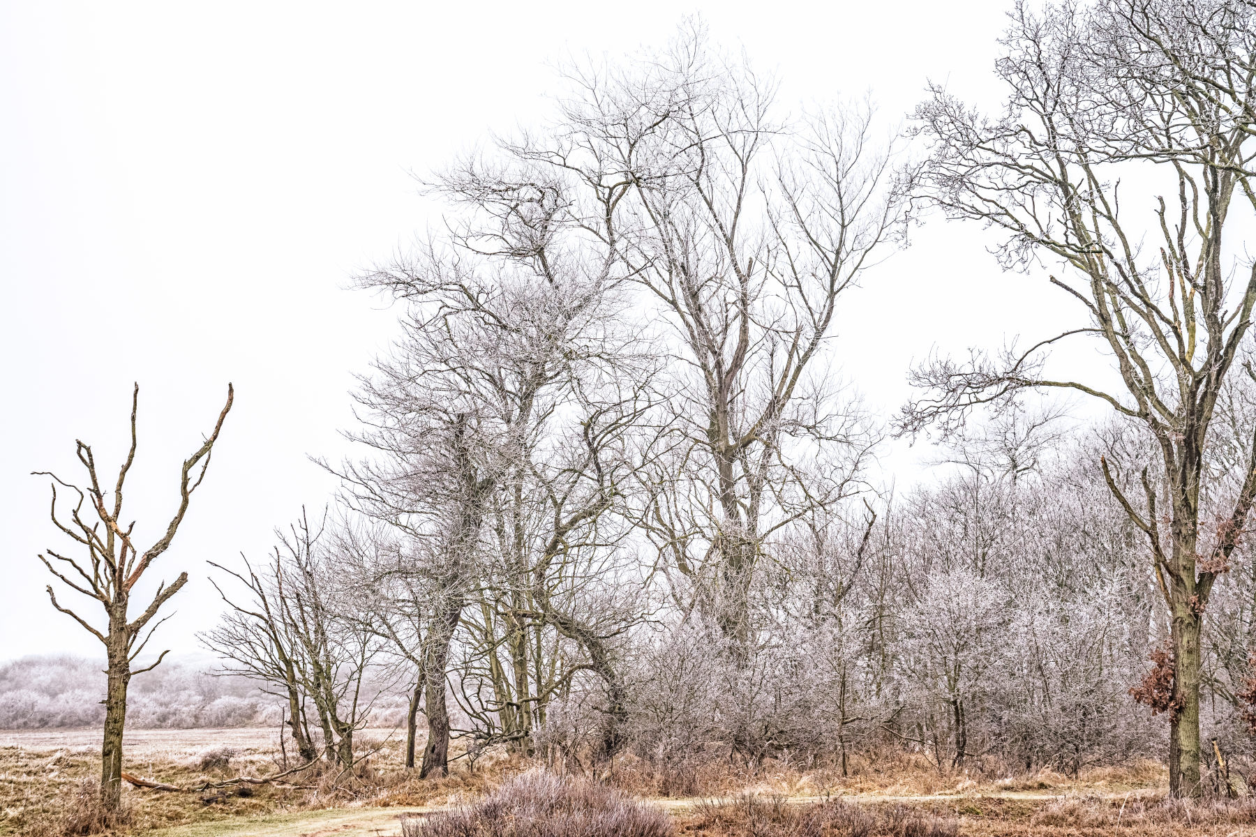 bare frosted trees