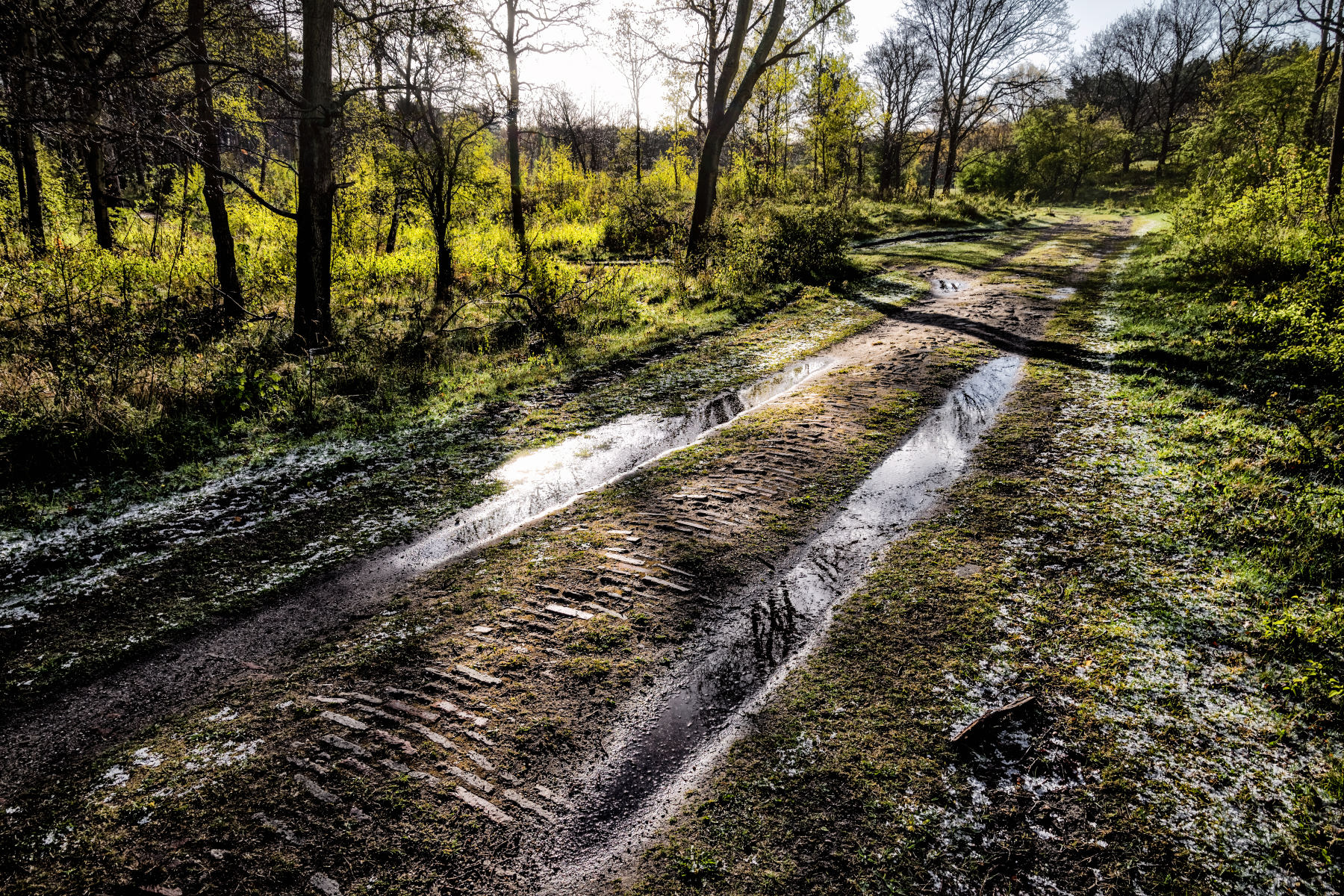 forest path after spring hailstorm