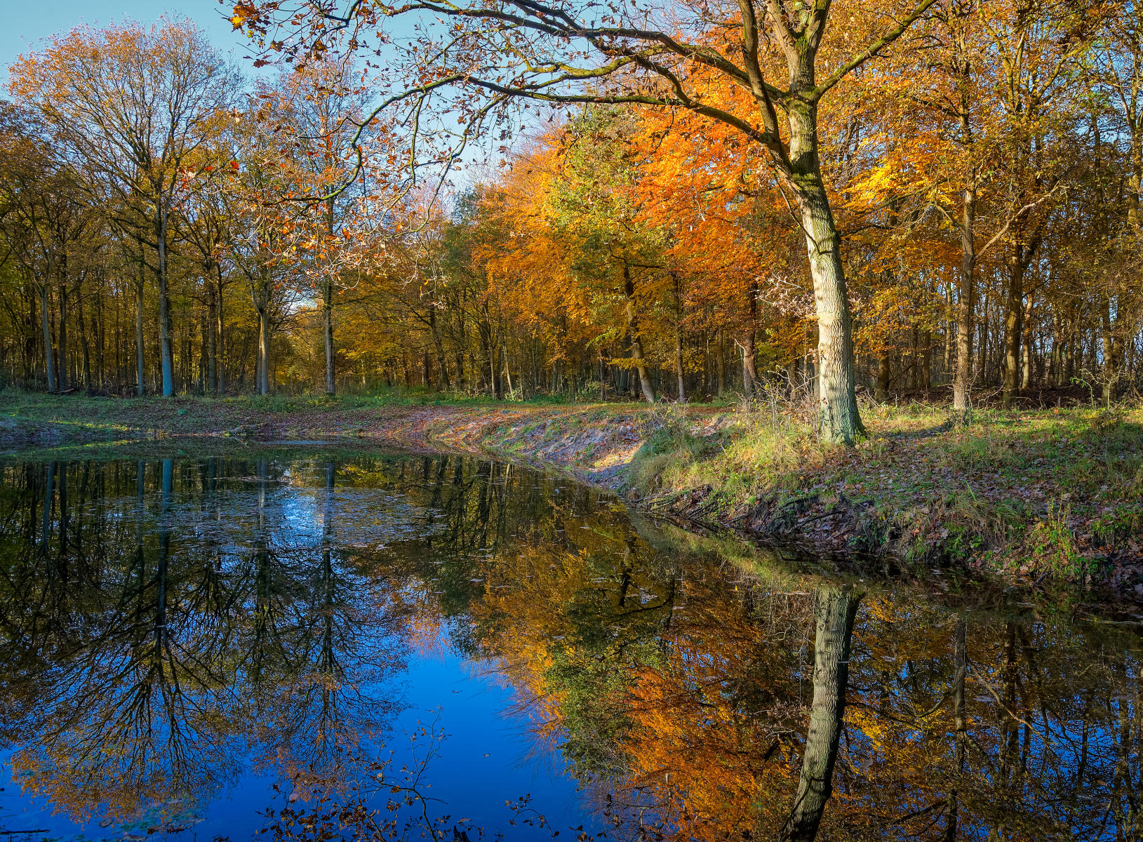 forest pond on sunny autumn morning