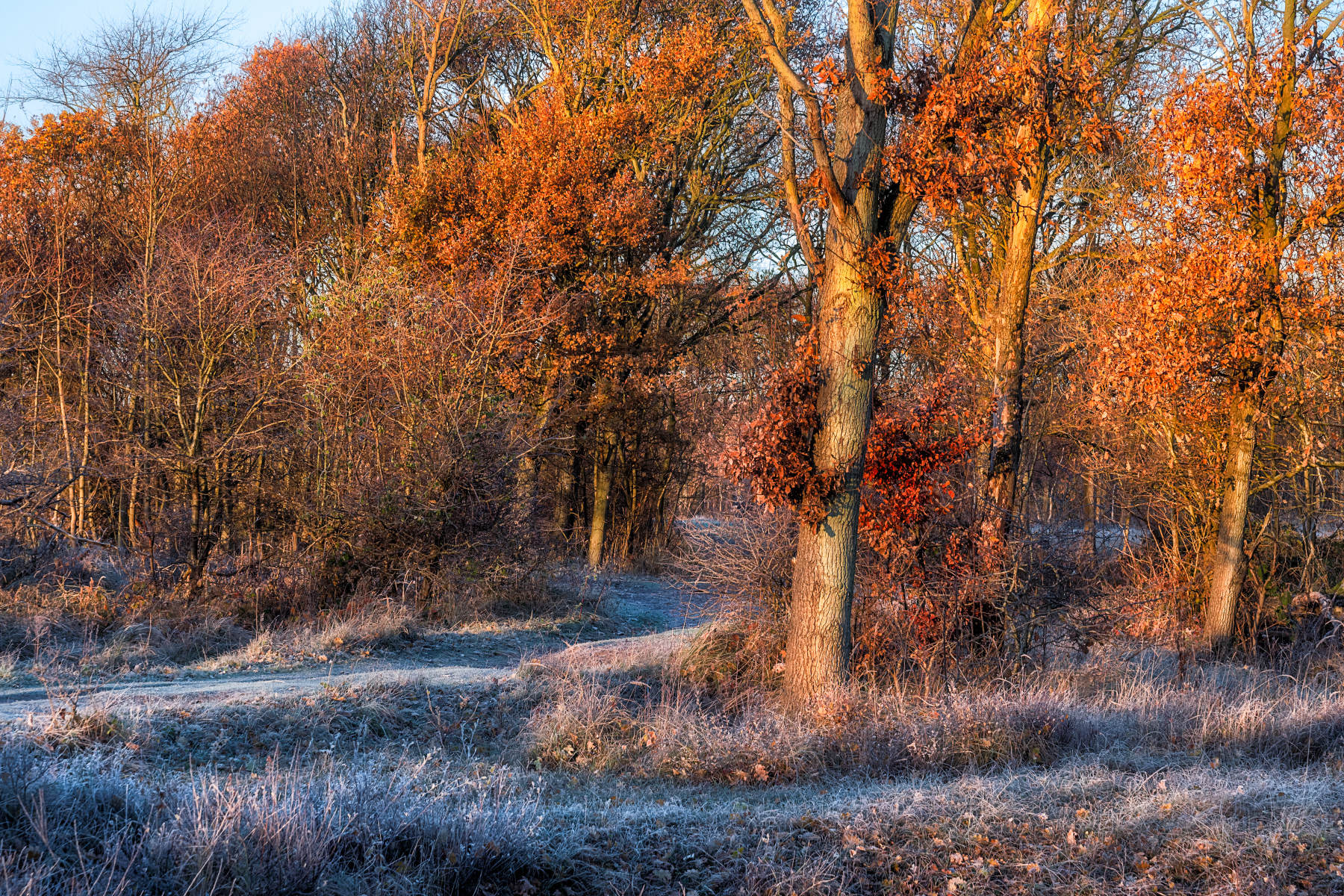 frosty morning with blazing colors