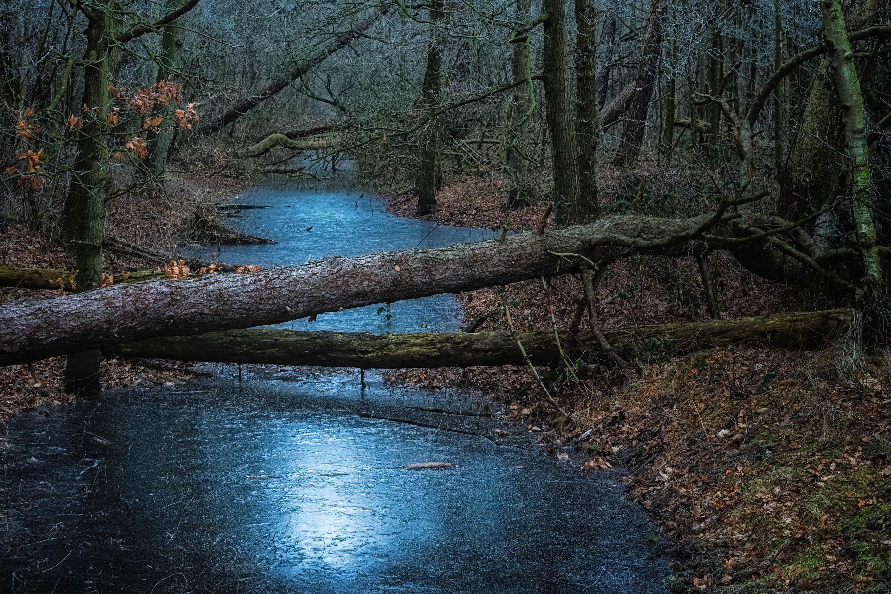 frozen forest ditch