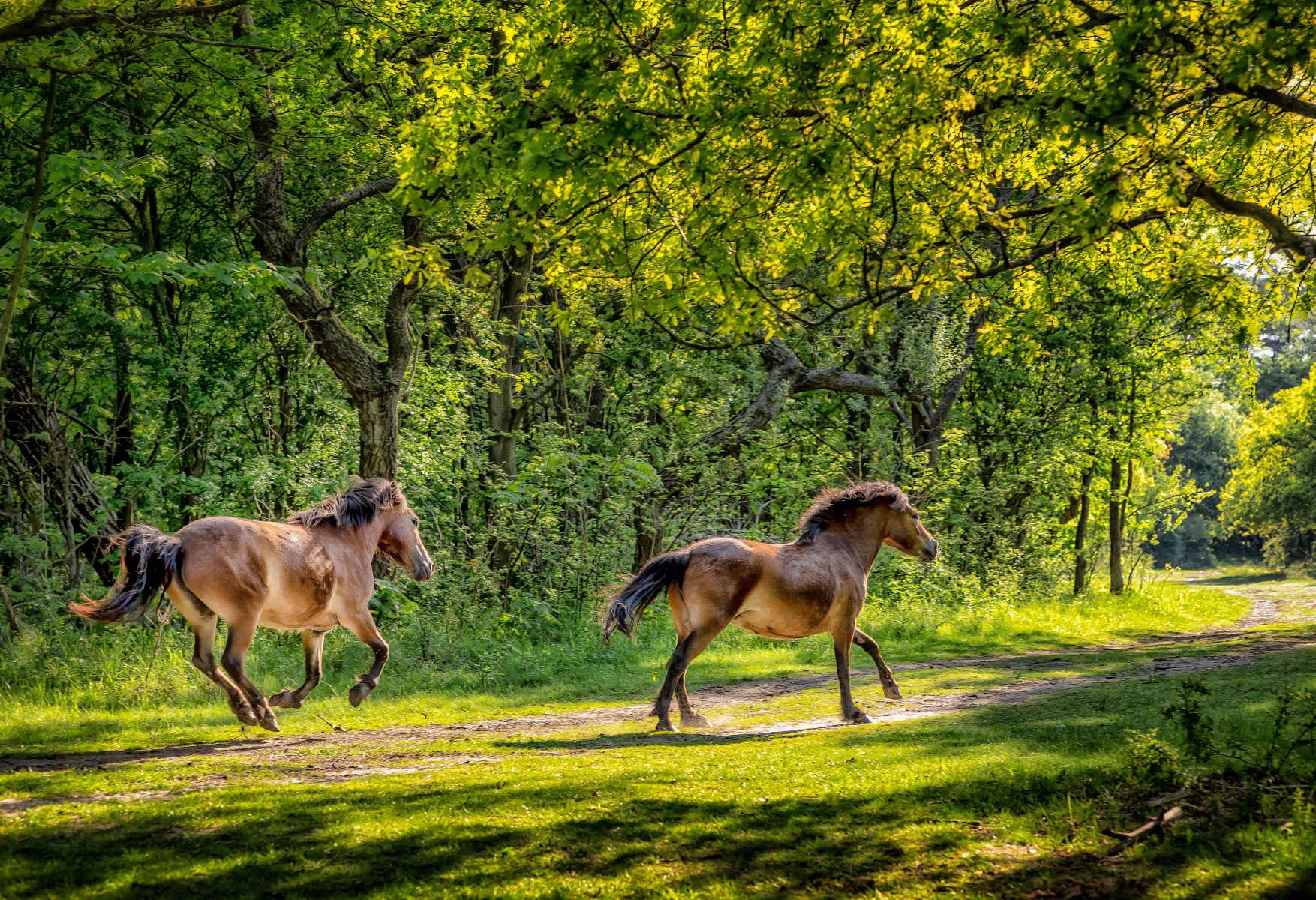 galloping in dappled evening light