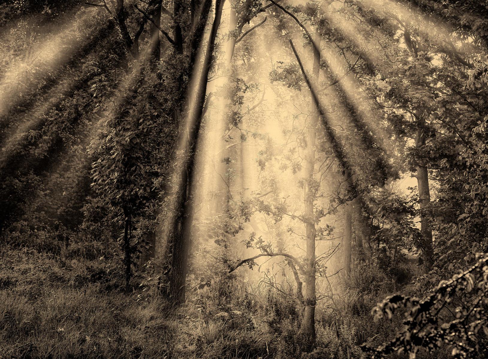 gateway of light