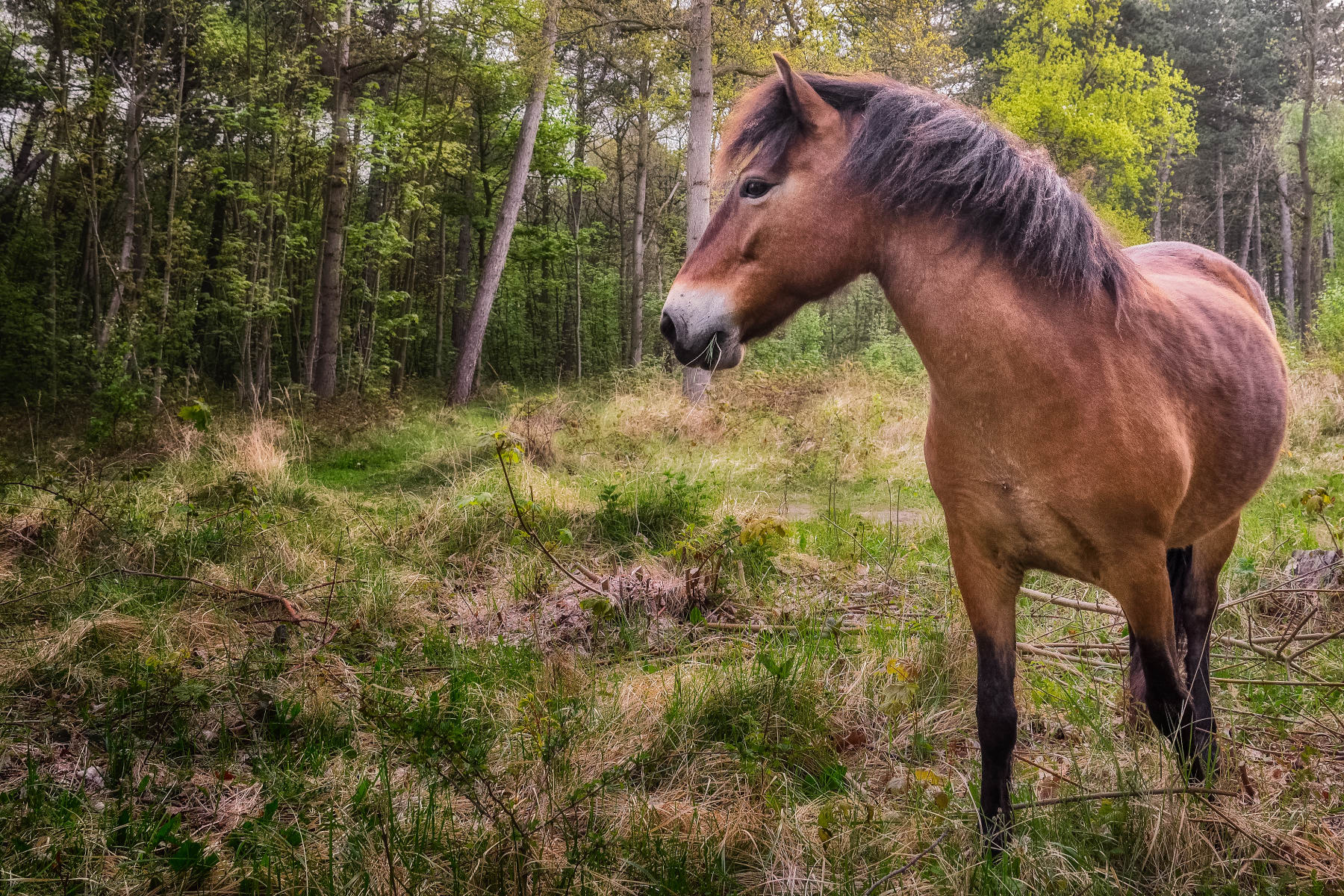 grazing undeterred by rough pasture