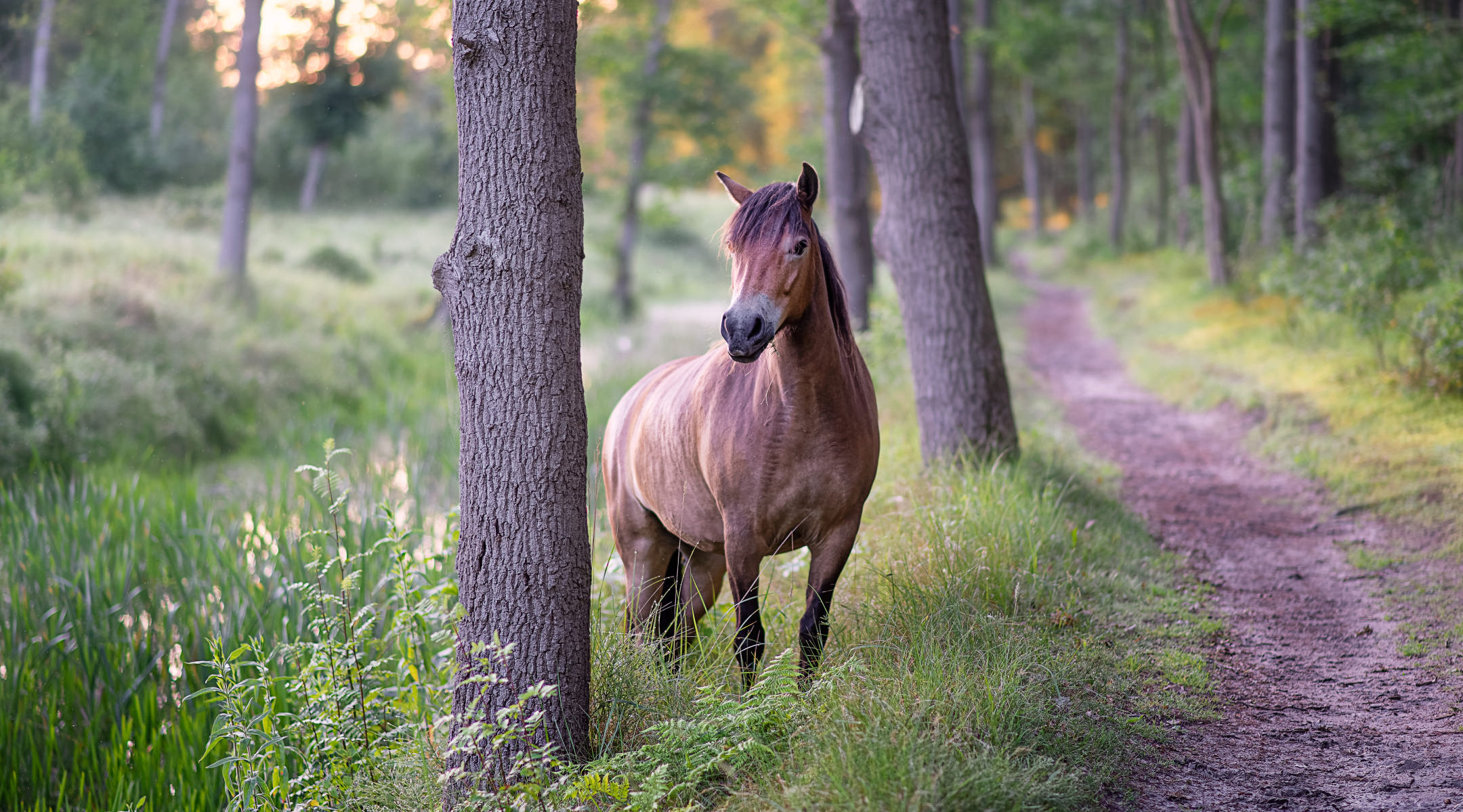 horse climbing from forest ditch onto path