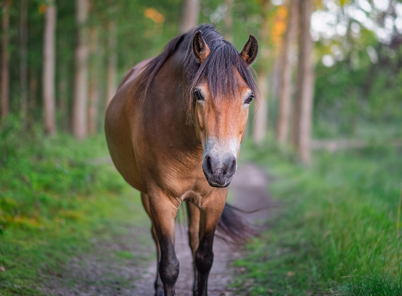 horse coming up close on forest path