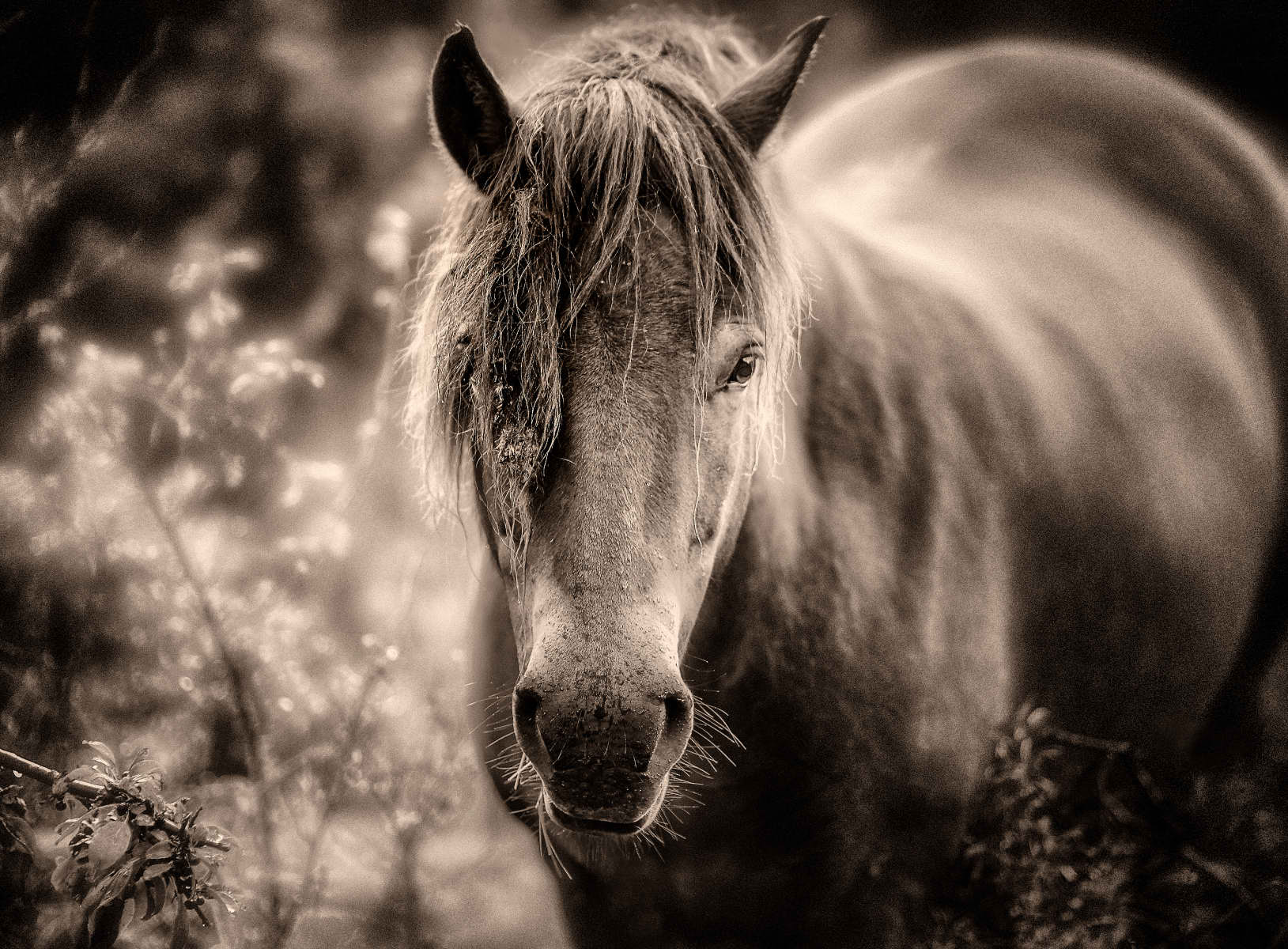 horse coming up out of the bush