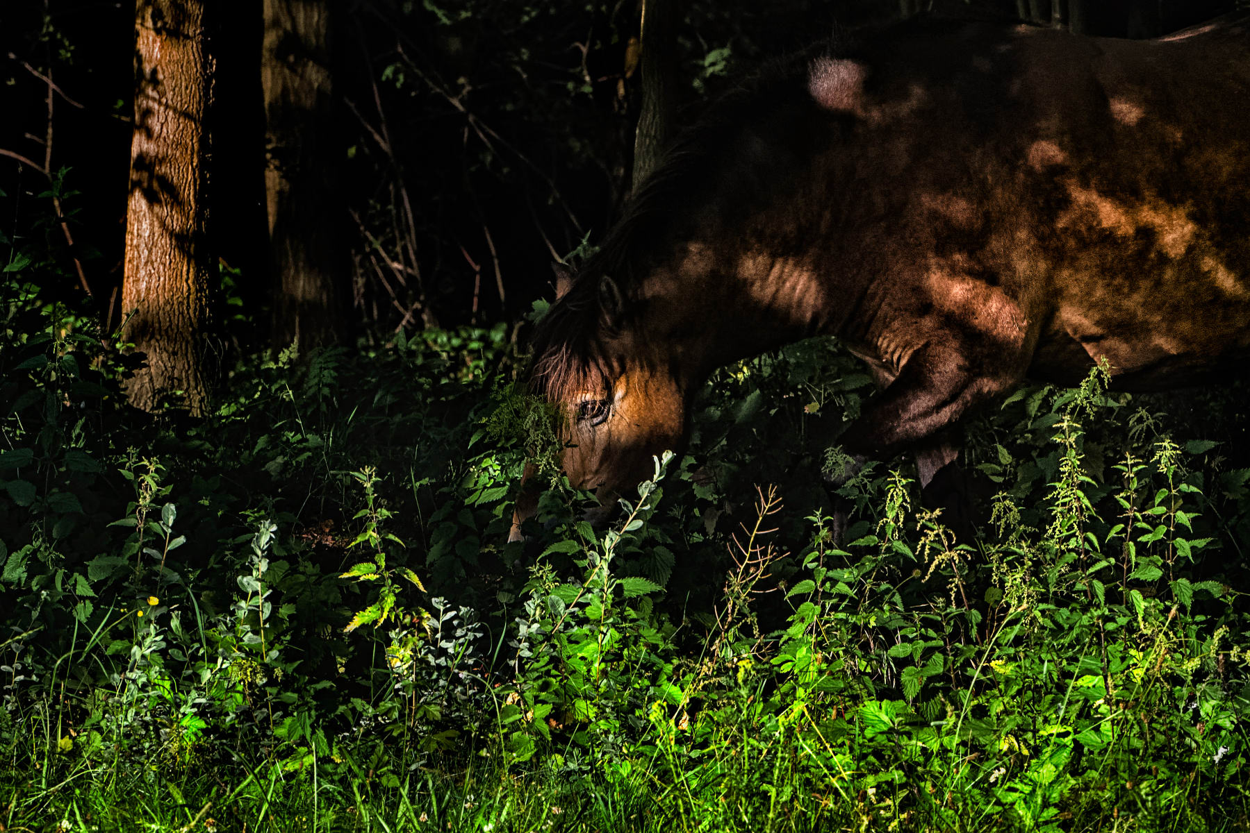 horse in dappled light at edge of forest