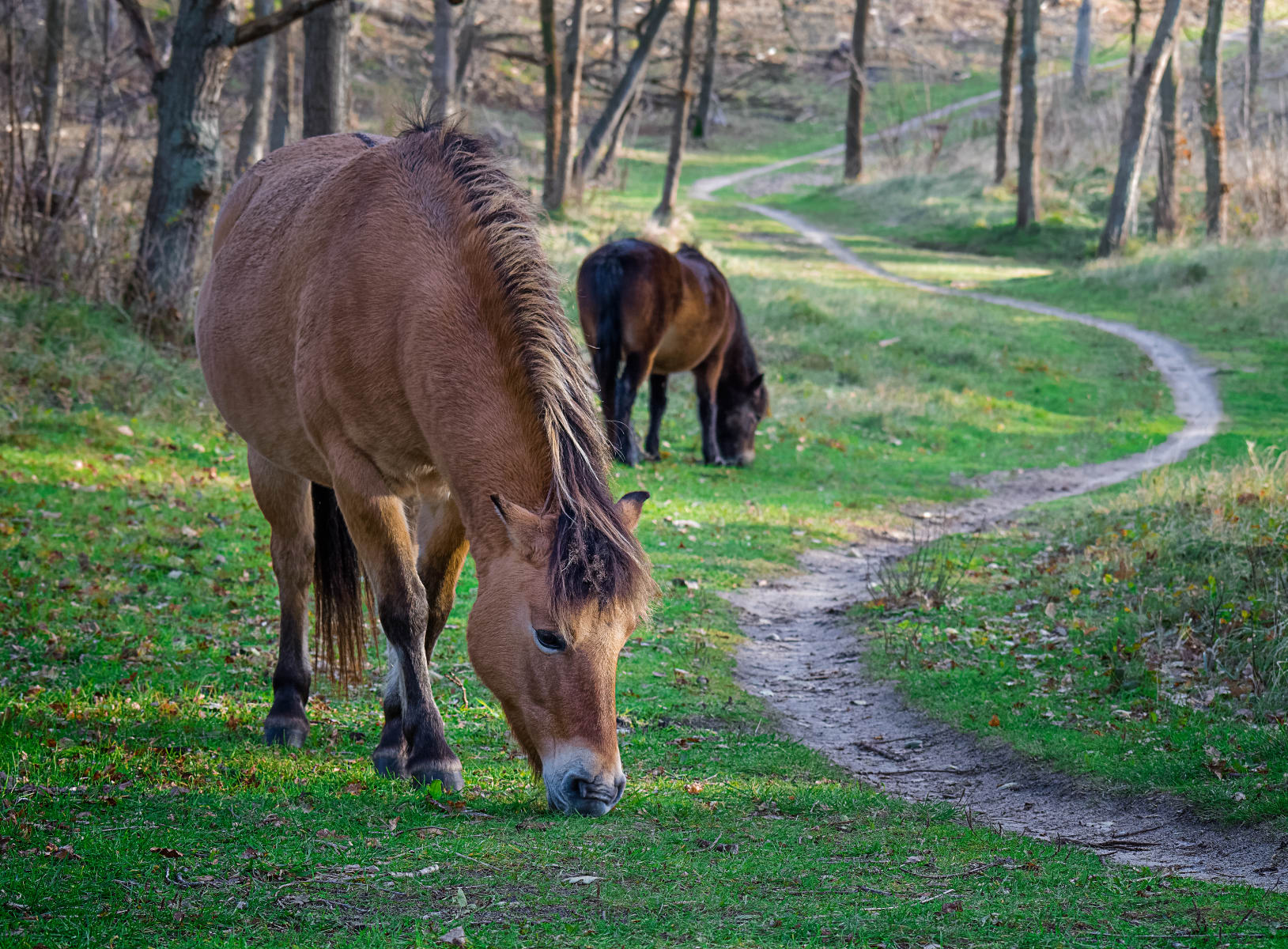horses grazing along a winding path